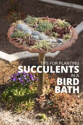 Tips for Planting Succulents in a Bird Bath