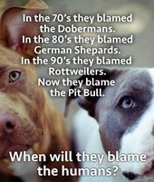 For All You Pit Haters Dog Quotes Pitbulls Rescue Dogs