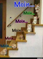 Photo of Moin ..   Lustige Bilder, Sprüche, Witze, wirklich lustig