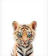 Tiger Print, Baby Tier Drucke, Kinderzimmer Wanddekoration, einzigartiges Baby Geschenk, The Crown Prints, Kinderzimmer Drucke, Baby Zimmer Wanddekoration, Baby Tiger