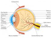 Yellow eyes: Causes in newborns, children, and adults 2