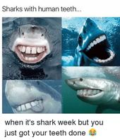 High 28 Shark Week Memes
