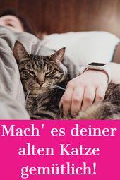 Wenn Katzen älter werden, brauchen sie in einigen Dingen sanfte Unterstützung ….   – Alles für die Katze