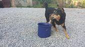 Dog activity – 30 days challenge