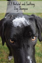 DIY Dog Does your dog need to get bathed frequently? Do they have dry, itchy, or flaky s...