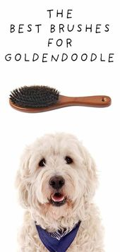 Técnicas de adiestramiento canino recuperadas con fluidez   – Dog Training Stuff