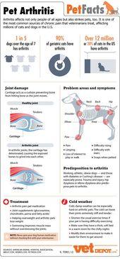 Pet Arthritis in Katzen-Infografik #Pet Boy #Pet Girl #Cute pet | petgirl.lemonco …