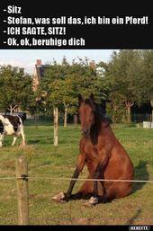 – Setz dich – Stefan, was ist das, ich bin ein Pferd!   Lustige Bilder, Sprüche, Wi …   – funny LOL II