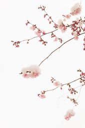 "Saatchi Art freut sich, das Foto ""Cherry Tree 14 – Limited Editio …  – Photography"