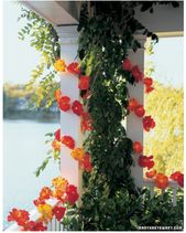lighted outdoor decorations – decorating