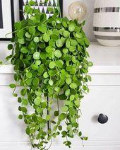9 great ideas for indoor plants