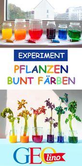 Pflanzen wachsen grün, grün, grün? Willst du mich veräppeln? Ist das dein Ernst, wenn du das sagst? Hier können Sie ausprobieren, wie Pflanzen aussehen, indem Sie ...