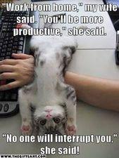 20 lustige Tierbilder und Meme, über die man nicht aufhören kann zu lachen: Haustiere sind muh