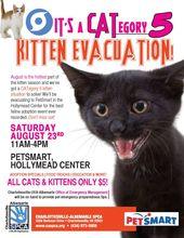 Great Kitten Adoption Poster Kitten Adoption Kitten Season Pet Adoption