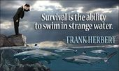 Survival quotes strength Survival quotes inspiration Survival quotes recovery Su…