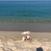 I came to Gangneung with my little friends. ❤️ I love you so much.  – DogBreeds