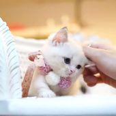 Diez razones impresionantes por las que todos deberían tener un gato #cat #catlover #catfacts #ilovecats #cats    – Kätzchen