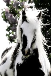10 beautiful pictures of horses – #beautiful # …