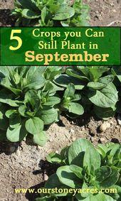 15 Gardening Tips & Tricks For Absolute Beginners – Garden – Outdoor Plants