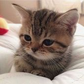 Baby Ilustration These pretty kittens will warm your heart. #cats are wonderful creatures.