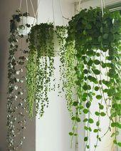 Über 40 Ideen für die heißesten Hängepflanzen zum Jahresende