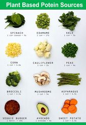 Plant Based Potein