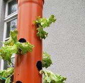 Vertikales Gärtnern auf dem Balkon – der Salatbaum-Workshop – #auf #Balkon #dem… – Mein Blog – Pflanzen Balkon