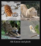 Alle Katzen sind gleich .. – Funny Memes Animals – # All # Equals #CATS # funny