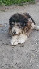 Tiere In Not Seite Hunde Aus Rumanien Hunde Aus Rumanien Tierschutz Hunde Hunde