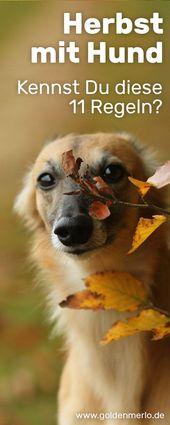 Fit und fröhlich durch die bunte Jahreszeit: 11 Tipps für den Herbst mit Hund –    miDoggy Gruppenboard   