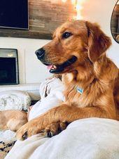 Happy first birthday to my best bud Jackson!   – Pet Dog Training Tips