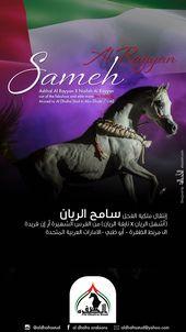 الفحل سامح الريان الى مربط الظفرة Mare Arabian Horse Horses