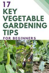 17 Wichtige Tipps für den Gemüseanbau für Anfänger  – Ideen für Gemüse gärten