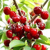 Schlussverkauf! 20 teile / beutel Kirschbaum, Seltene Farbe, Bonsai Baum Bonsai Zwergkirschbaum Bio Obst Hausgarten Topfpflanze   – Products