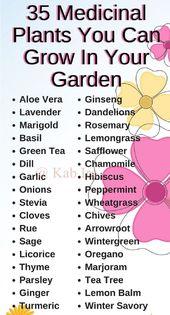 Medicinal plant you can grow in you garden.