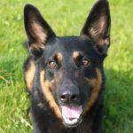 Pin Von Sara Bri Auf Shop Pets4homes Mustangs Schone Hunde Tiere Rettungshunde