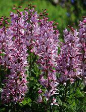Garden plants for climate change – so you garden on dry soil