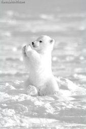 非常に素晴らしい白い動物   – Süße Tiere