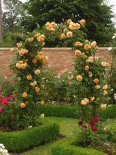 The Most Fragrant Roses for Your Garden | HGTV