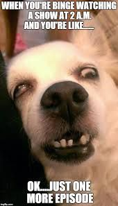 Afbeeldingsresultaat Voor When You Re So Tired Meme Funny Dog Faces Cute Animal Memes Cute Funny Animals