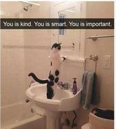 Lustige Tier Meme Des Tages 27 Bilder – Süße Katzen – #Tier #Katzen #Süss #Tag #Fuchs
