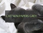 cute cat walpapers   cartoon cat walpapers   Aesthetic Cat Walpapers – #phonecat …