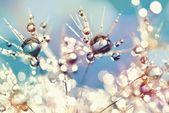 Artland Wandfolie »Julia Delgado: Pusteblume Regenbogentropfen« online kaufen | OTTO