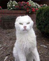 ブサカワ猫の画像 58枚をまとめて紹介 ブサイク猫 永遠の大学生 ゲーム 小説 バイト おもしろ 動物のメディア 子猫 キュートな猫 クールな猫