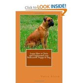 Learn How to Train and Understand your Bullmastiff Puppy – Cool Pet Stuff