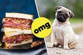 Machen Sie ein Sandwich und wir werden Ihnen sagen, welche Art von Hund Sie sind   – Random/Miscellaneous