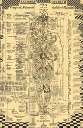 The Occult Anatomy Print-24×36  Kabbalah Alchemie Baum des image 6