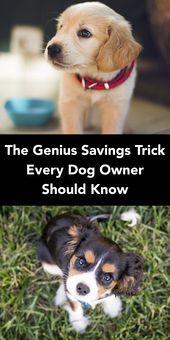Great Dane Black Dog Training Dog Owners Dogs