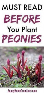 common outdoor plants #OutdoorPlants – Gardens