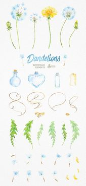 Dandelions 37 Watercolor Elements. Clipart, blowballs, floral wedding, invitation, greeting card, diy clip art, flowers, quote, love, jars – Bobo